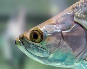 fischöl omega-3 fett
